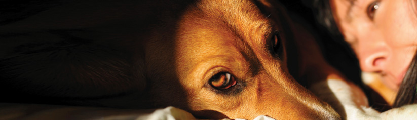 Understanding the causes of faints and fits in dogs or cats