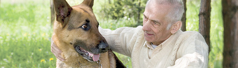 Lymphoma in dogs: Diagnosis and treatment